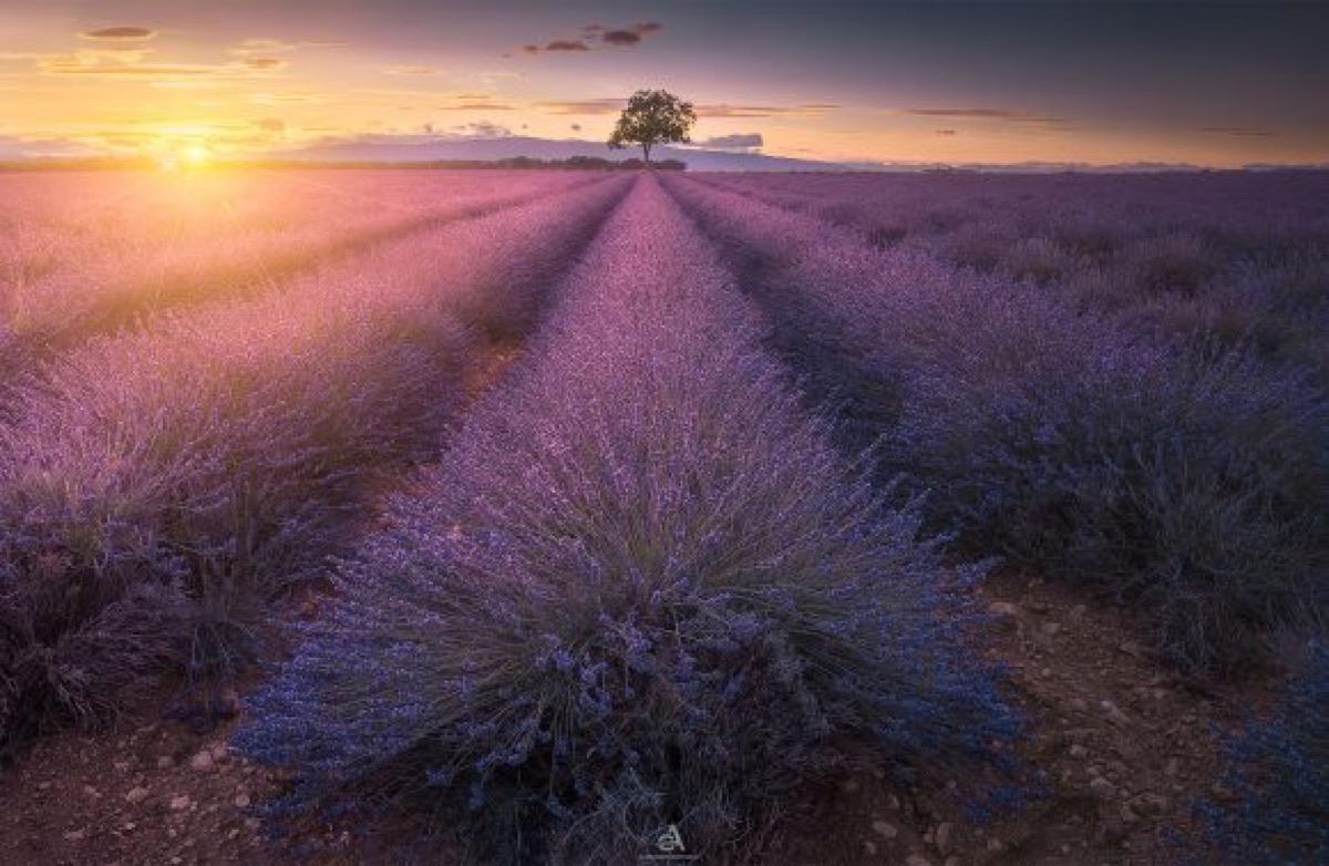 PROVENZA – Viaggio Fotografico tra colori e profumi