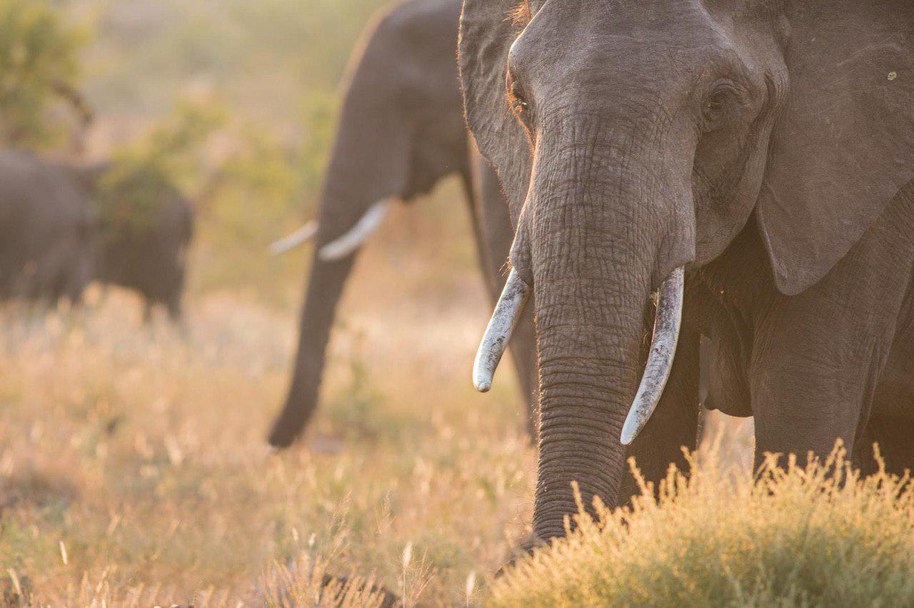 SUDAFRICA CANYON & SAFARI ON THE ROAD