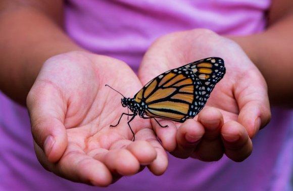 Il Viaggio della Farfalla
