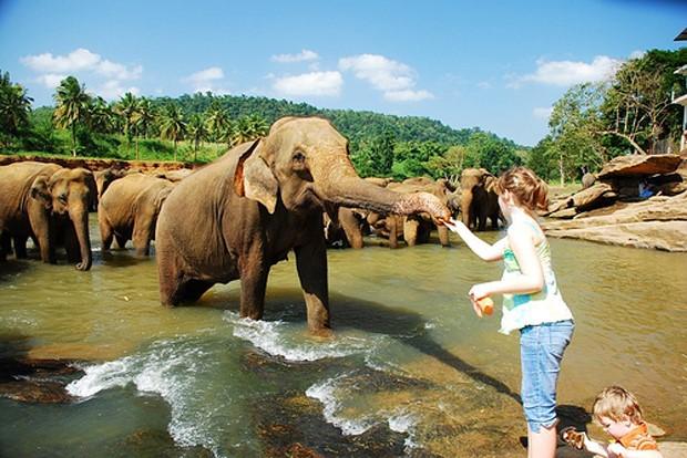 Capodanno in Sri Lanka