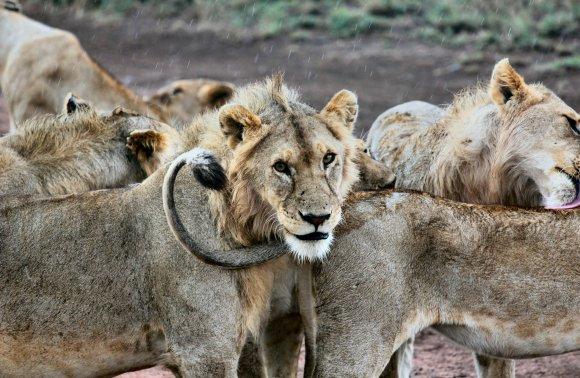 Tanzania Safari Fotografico
