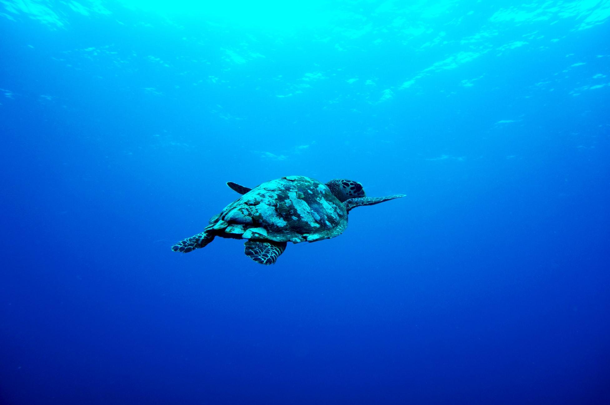 Bali – Viaggio Diving