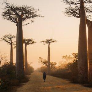 Madagascar Selvaggio