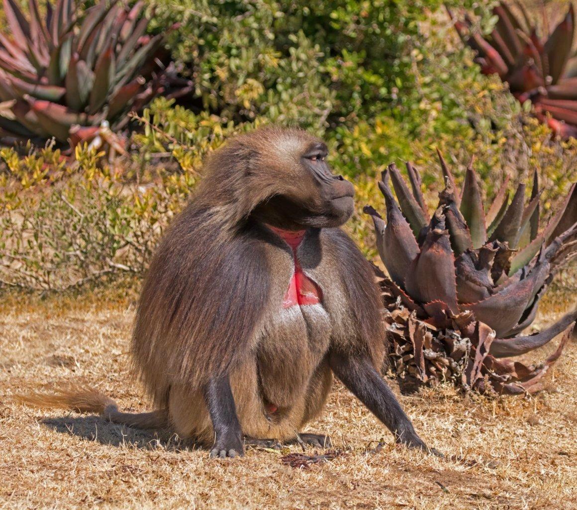 etiopia viaggio di gruppo