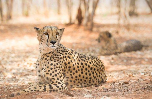 Safari fotografico in Tanzania