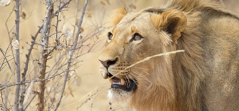 safari fotografico tanzania