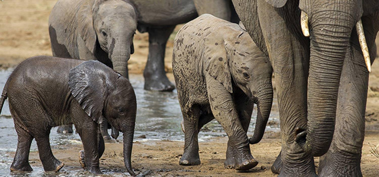 animali in tanzania fotografia