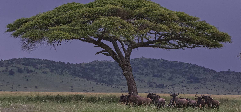 viaggio di gruppo tanzania
